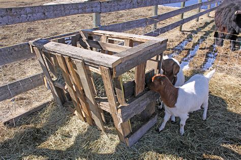 family farm experience diy how to build your own treehouse goat house pallets www pixshark com images galleries