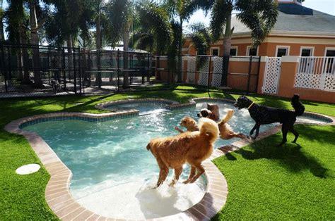 backyard dog pool 17 best images about k9 fake grass on pinterest dog