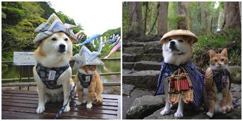 film lucu sedih jepang lucunya anjing dan kucing asal jepang ini bersahabat lho