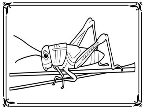 Free Grasshopper Coloring Pages Az Coloring Pages Grasshopper Coloring Page