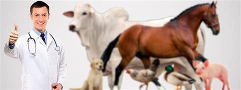 imagenes de medicas veterinarias veterinaria y zootecnia