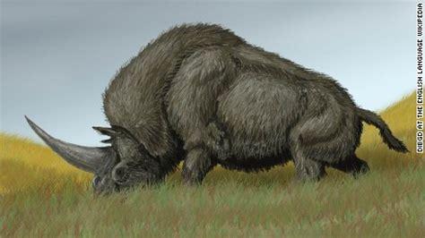 imágenes de unicornios verdaderos real unicorn remains found cnn