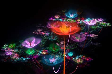 imagenes en movimiento luminosas flores luminosas 9098
