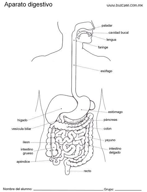 aparato digestivo esquemas aparato digestivo con nombres 0002 jpg 1524 215 2000