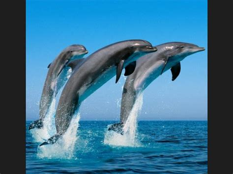 imagenes sorprendentes de animales gigantes ranking de historias sorprendentes de animales que
