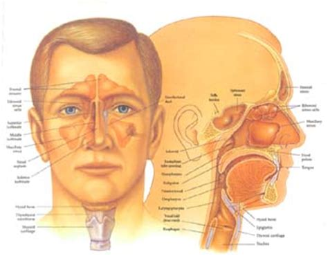 ear nose throat ear nose and throat disorders causes symptoms