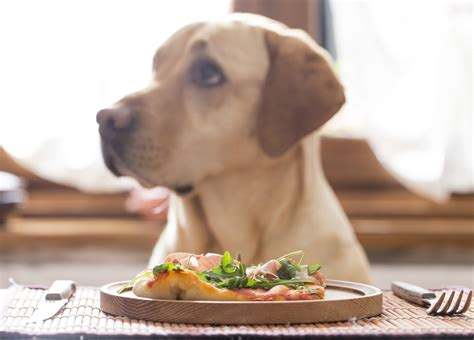 dog not eating remembering the 4 types of food you must not give to your
