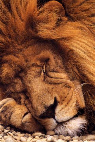 fonds decran animaux en hd pour iphone  ipod touch info idevice