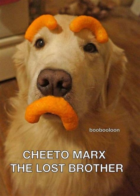 golden retriever humor 1000 images about goldens on golden retrievers puppys and