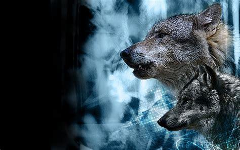 Imagenes Sorprendentes De Lobos | nuevas fotos de lobos fondos de escritorio gratis