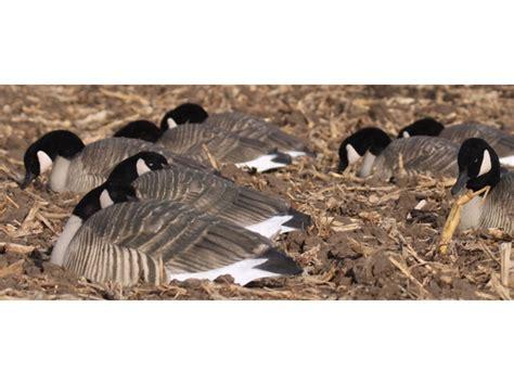 Sleeper Goose Decoys by Ghg Pro Grade Honker Sleeper Goose Decoy Shells Pack Of 12