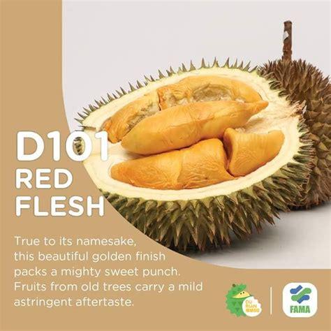 jenis jenis durian beserta nombor code  rare