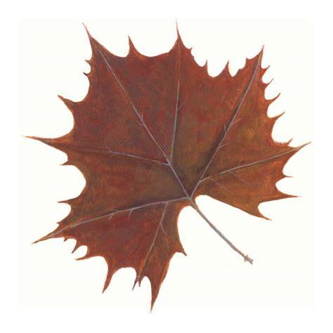 Etnic Brown Leaf brown maple leaf by woodworth