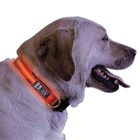collar light for small dogs nite ize nite dawg light up dog collar red led red webbing