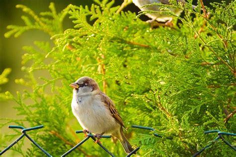 imagenes de flores y animales banco de im 193 genes 12 im 225 genes de la naturaleza con aves