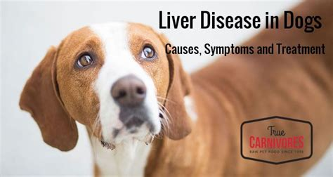 liver disease in dogs pet food and cat food delivery vancouver