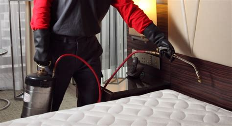 bed bug spray for clothes bed bug spray for clothes bed bugs where do bed bugs