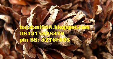 Benih Sengon Buto jual biji benih dengan harga murah bajatani jual
