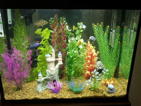 plants that thrive in artificial light cichlids com tank exles artificial jungle