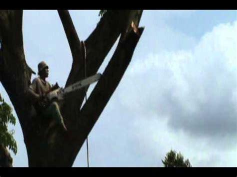 Gergaji Pohon tebang pohon dengan gergaji mesin jatuh avi