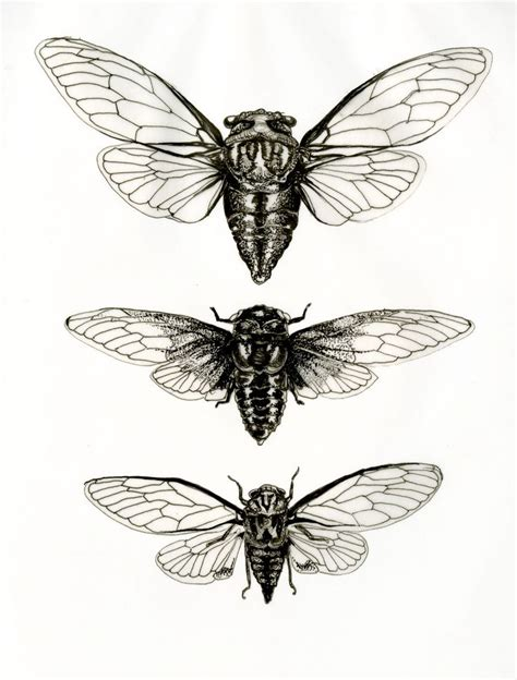 cicada tattoo best 25 cicada ideas on scientific