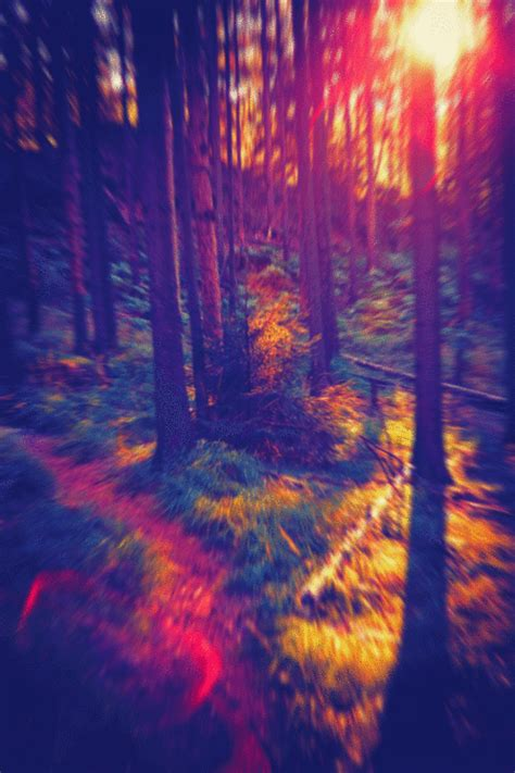 imagenes hipster tumblur trippy forest tumblr