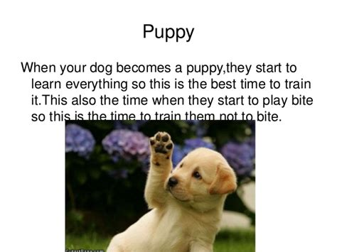 cycle of a puppy cycle