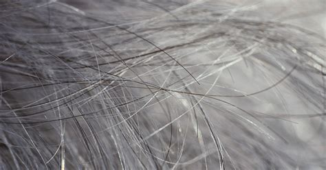 gray pubic hair what you need to know about going gray in your 20s huffpost