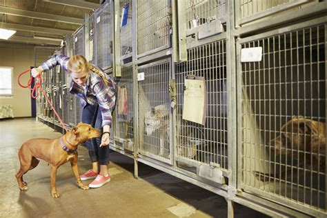 Kennel Assistant Salary kennel attendant career profile