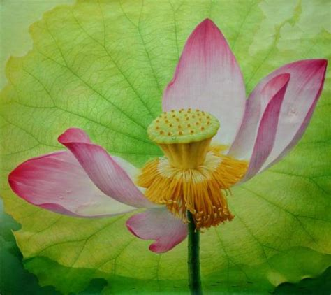 lotus paintings by jiang debin and design