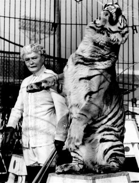 möbel starke 15 best images about tiger tiger arklady on