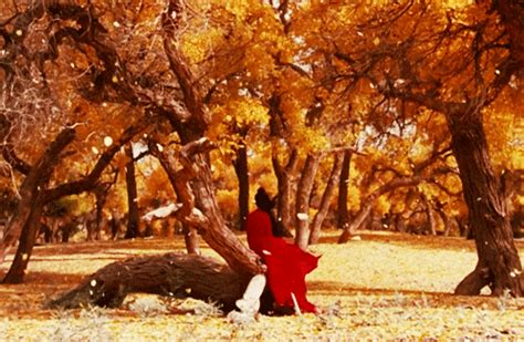 fallen leaves film kung fu hero gif find share on giphy