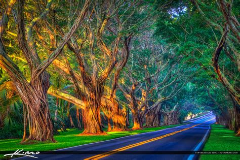 lake katherine tree lighting hdr photo gallery