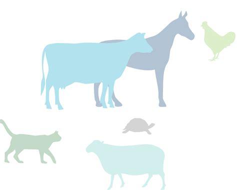 powerpoint templates veterinary medicine frontiers in veterinary science