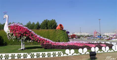 miracle garden dubai 1 manisha tomer s