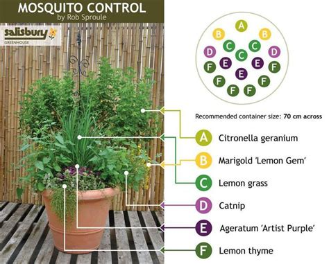 best plant for mosquito repellent 25 best ideas about mosquito plants on pinterest plants