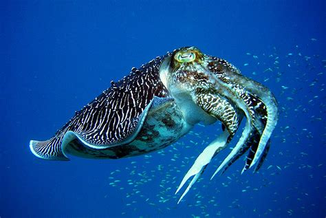 dive holidays guide to tioman island scuba diving holidays in tropical