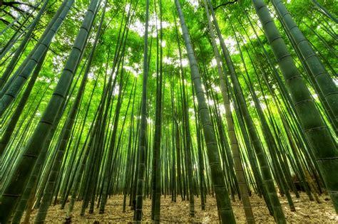 wallpaper daun bambu gambar cabang menanam bidang sinar matahari daun