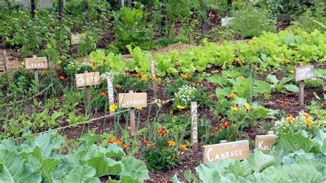 start  vegetable garden  steps  success