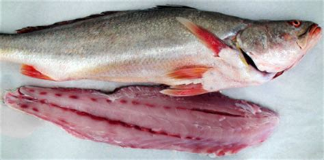 Cryovac Fish Shelf by Pacific Harvest Seafoods