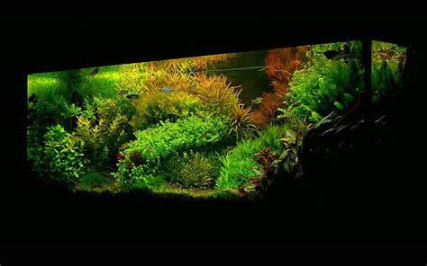 membuat aquascape dutch style dutch style aquarium aesthetics aquarium maintenance