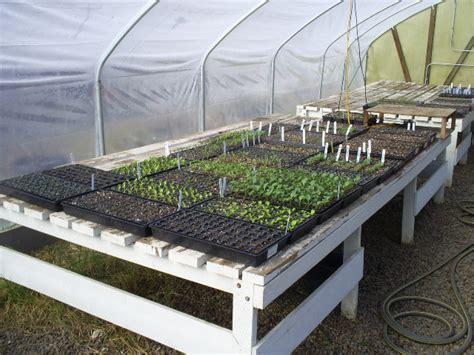 greenhouse vegetable gardening greenhouse vegetable gardening