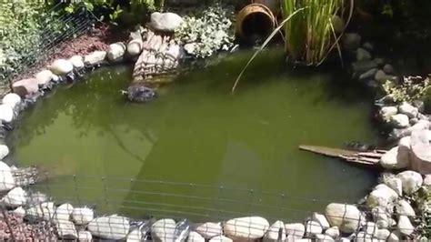 laghetto da giardino per tartarughe laghetto tartarughe e pesci hd