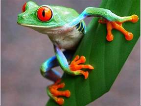 colorful frog 113 best images about frogs on trees