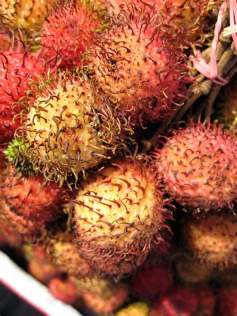 prickly spiny fruit tree mikesjournal