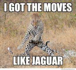 Jaguars Memes Like Jaguar Weknowmemes