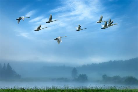 you ll be stunned to know how birds navigate during migration