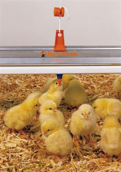 pertumbuhan ayam pedaging pertumbuhan unggas big dutchman