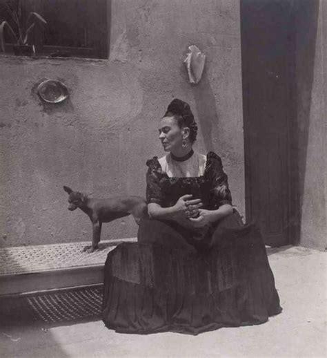 frida kahlo und ihre exotische haustiere der bekannten schnauzen im spotlight