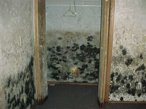 Mold In Apartment In California Sling Of Environmental Losses In Buildings 187 National E